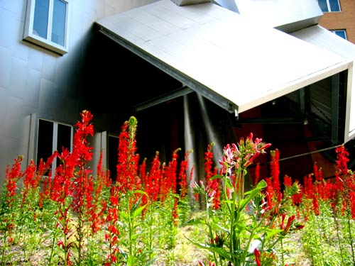 Stata, side view from Vassar, flowers